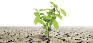 rafaela-santos-resiliencia-levantarse-luchar